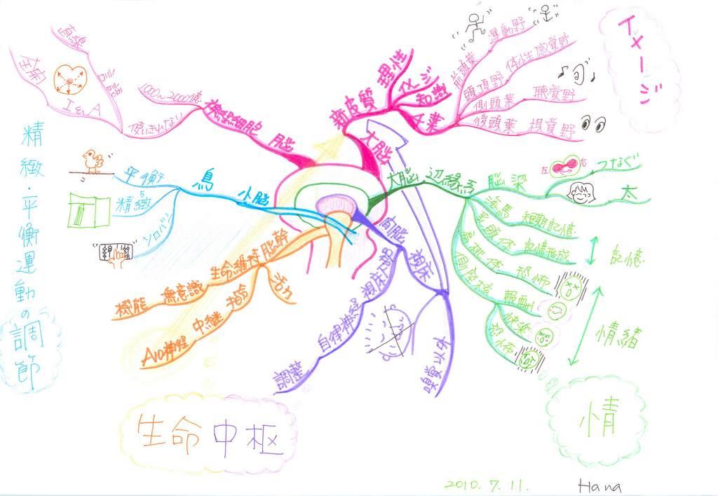 主要な脳の構造、機能についてまとめたマインドマップ【本格版】