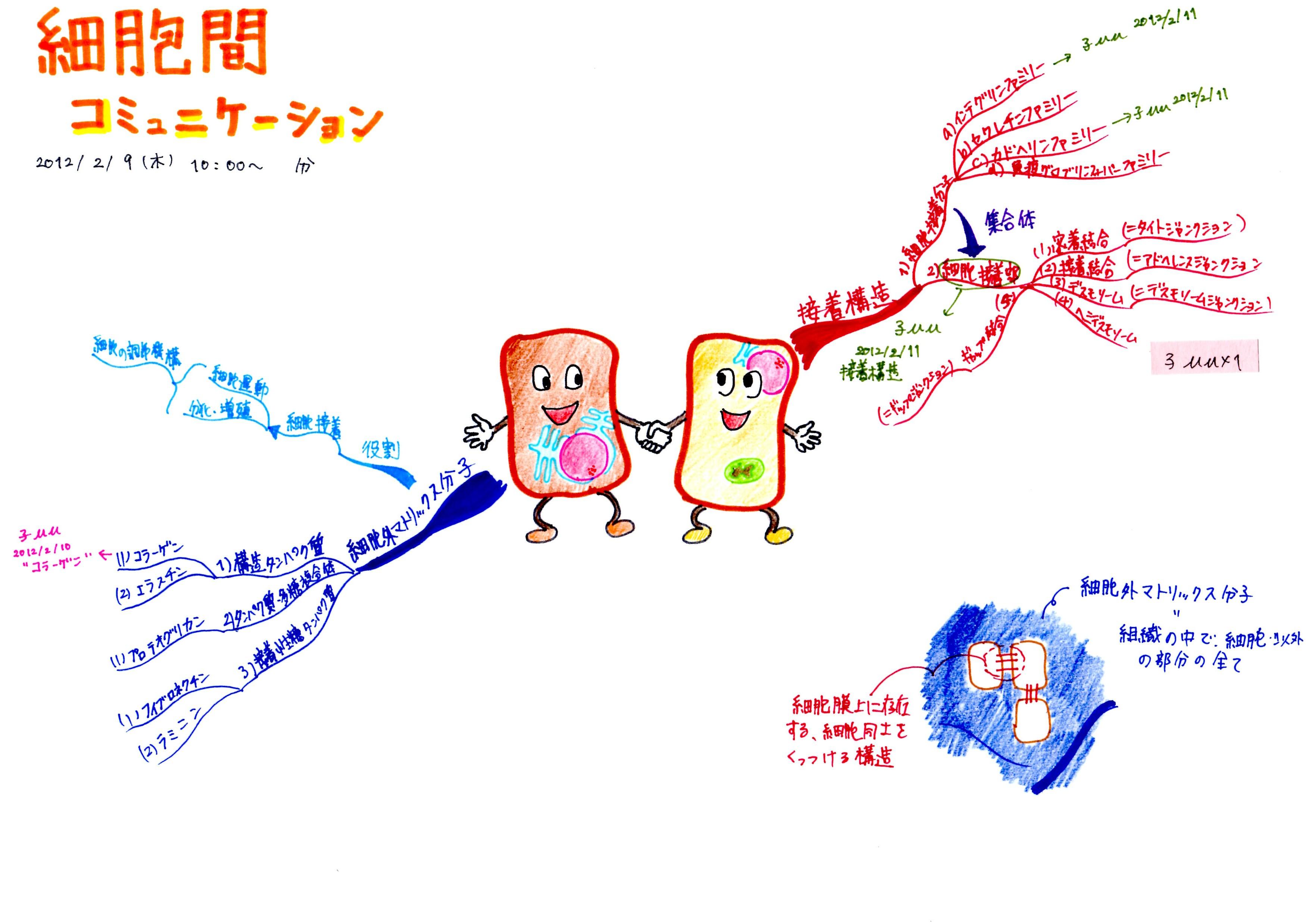 細胞間コミュニケーション